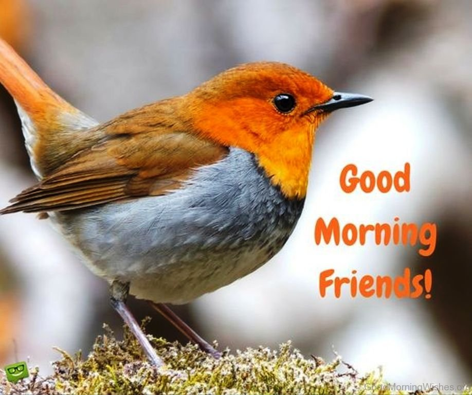 64 good morning wishes for friends