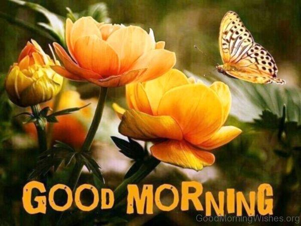 Amazing Good Morning Image 3