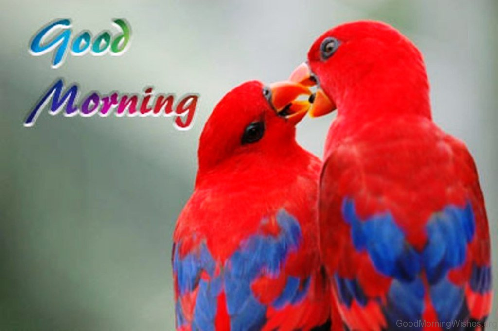 Good Morning Beautiful Birds Images : Good morning pictures red bird