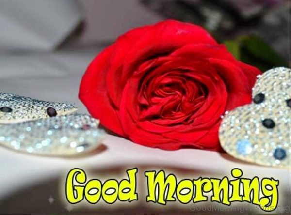 Beautiful Animated Good Morning Wishes With Rose Flower