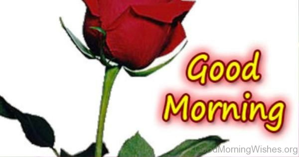 Beautiful Good Morning Ecard with rose flower