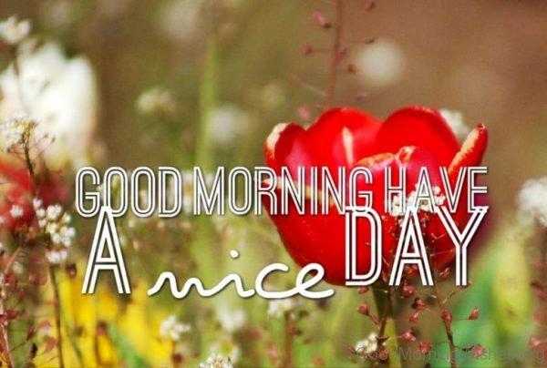Beautiful Good Morning Image 2