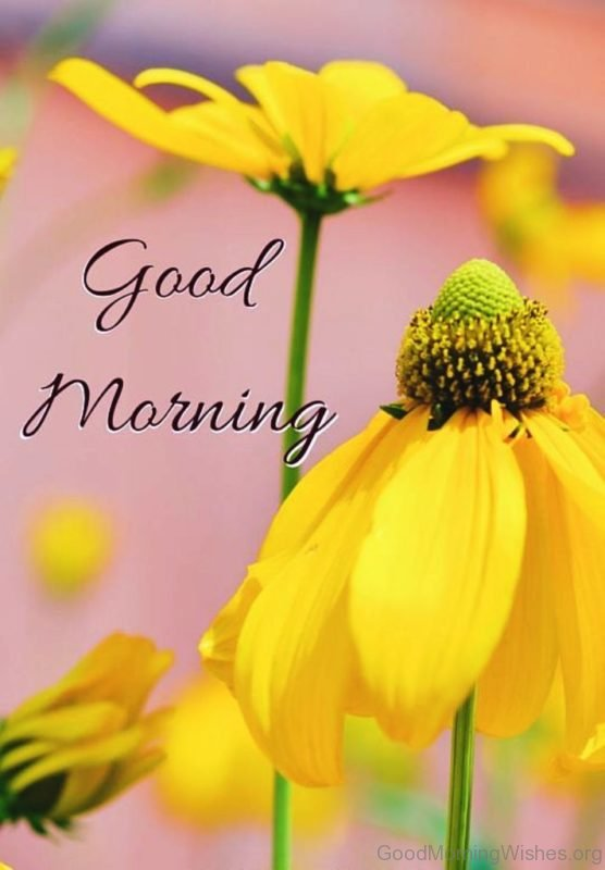 Beautiful Good Morning With Yellow Flowers