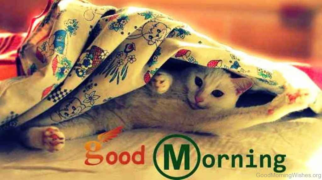 50 Funny Good Morning Wishes