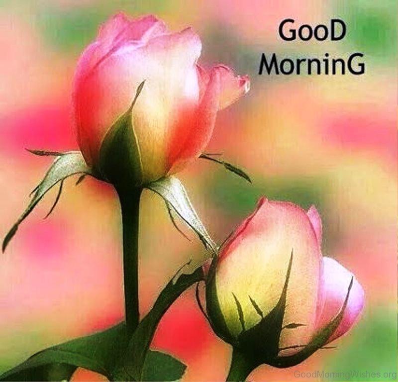 78 fresh good morning wishes - Good morning rose image ...