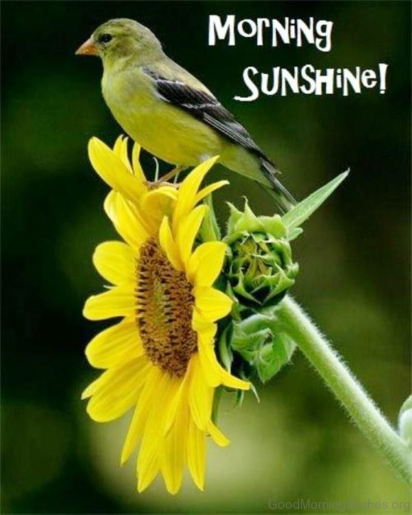 Beautiful Sparrow Good Morning Pic