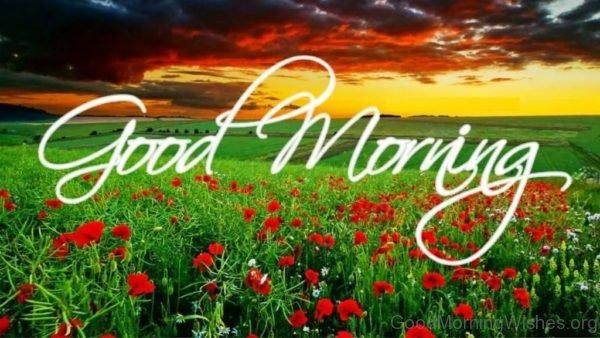 Brilliant Good Monring Flowers Pic