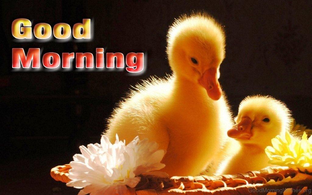 Good Morning Cute : Fresh good morning wishes