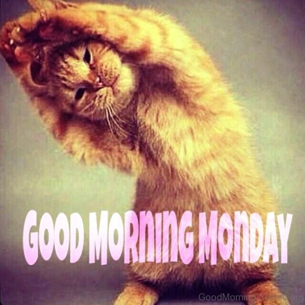 Cute Pic Of Good Morning Monday