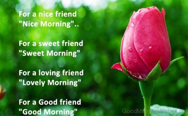 For A Nice Frifends Nice Morning