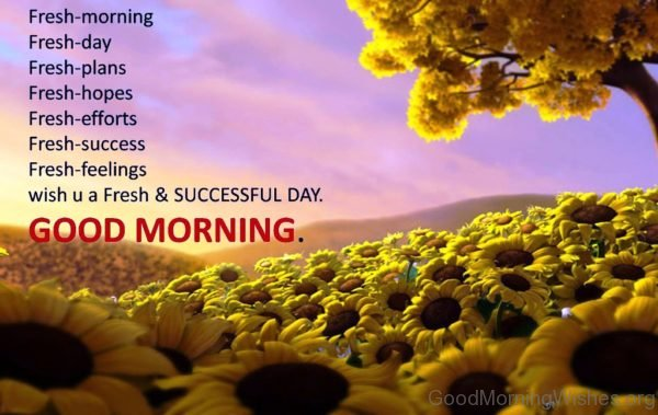Fresh Morninmg 1
