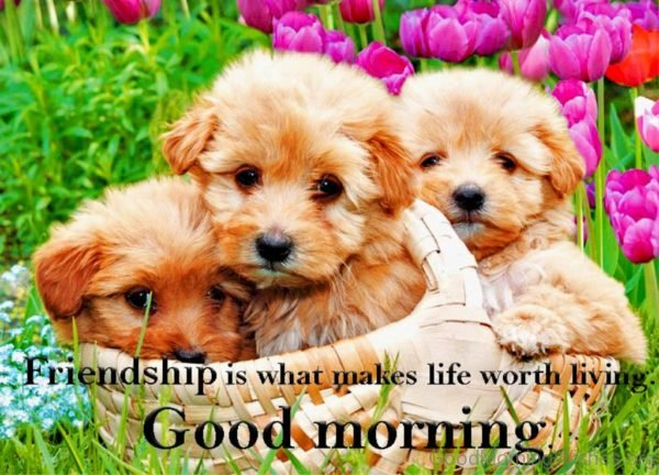 Friendship Is What Makes Life Worth Living