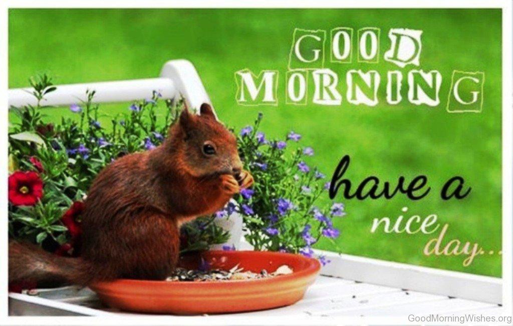 Funny goodmorning wishes