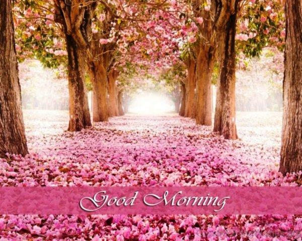 Good Morning 1 2