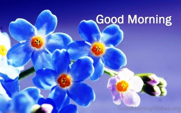 Good Morning Beautiful Blue Flowers Image