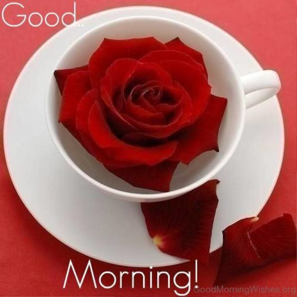 Good Morning Cup Of Rose For You