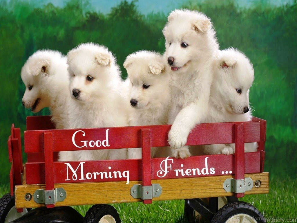 This Morning Dogs For Good