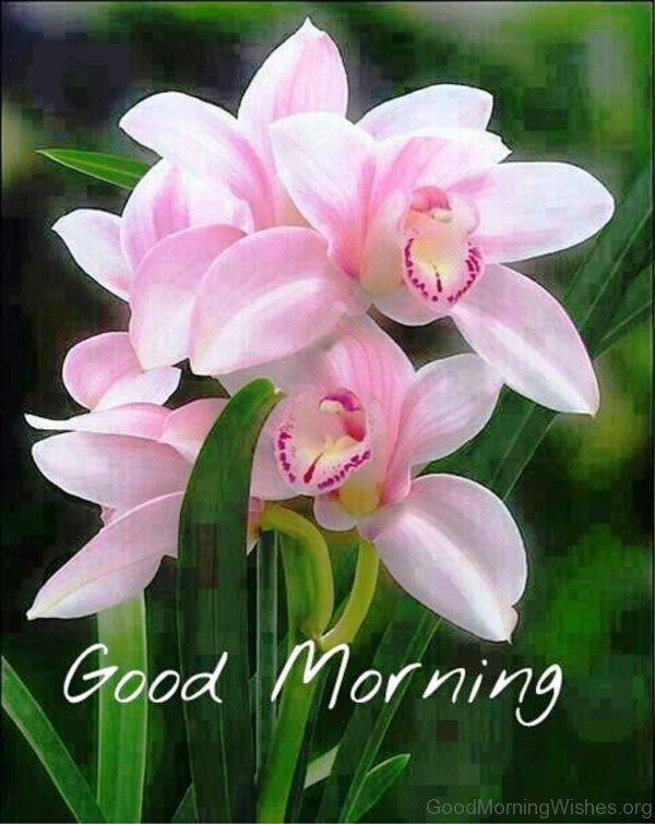 Good Morning Fresh Flowers Image