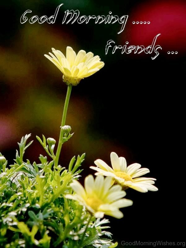 Good Morning Friends 5