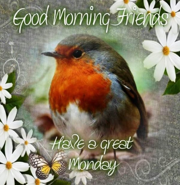 Good Morning Friends Have A Great Monday