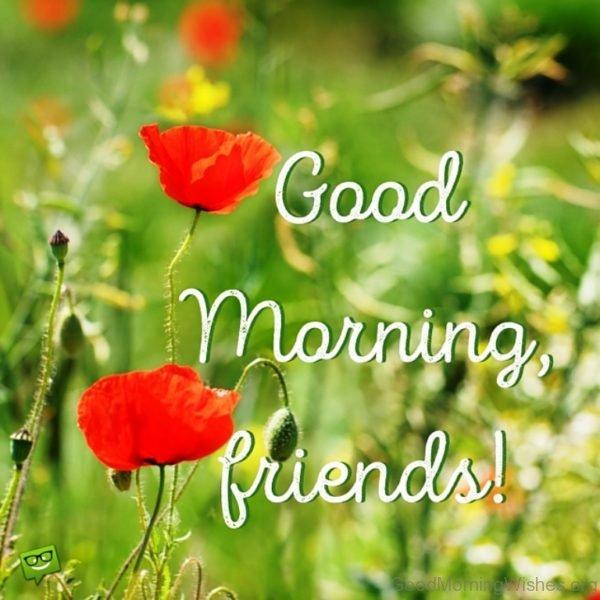 Good Morning Friends Photo