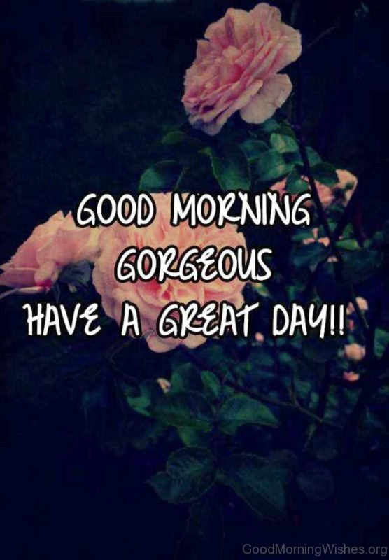 Good Morning Gorgeous Have A Great Day