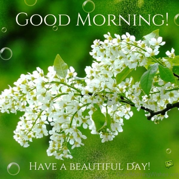 Good Morning Have A Beautiful Day 2