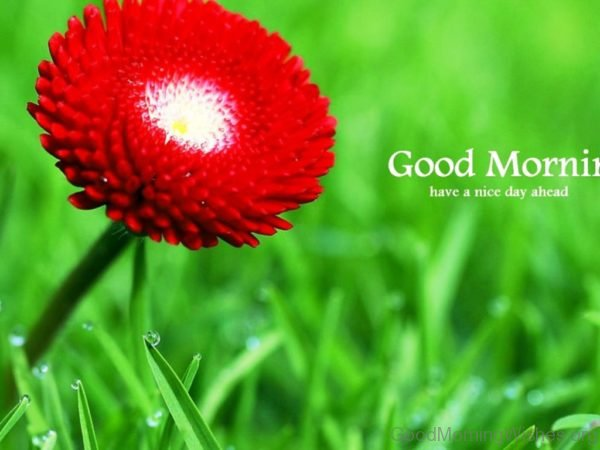 Good Morning Have A Nice Day Ahead 1