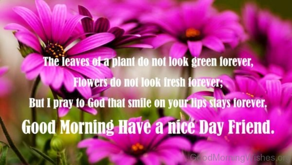 Good Morning Have A Nice Day Friend