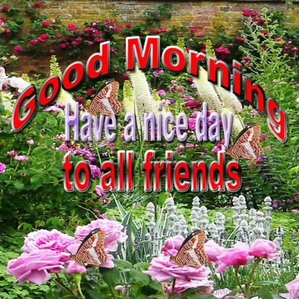 Good Morning Have A Nice Day To All Friend s