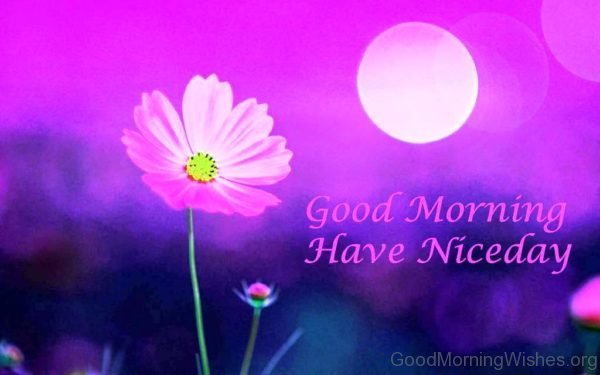 Good Morning Have Niceday