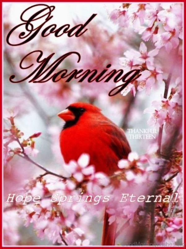 Good Morning Hope Springs Eternal
