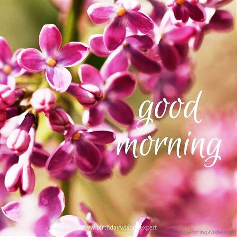 Good Morning Wishes With Beautiful Flowers Images : Lovely good morning wishes with flowers