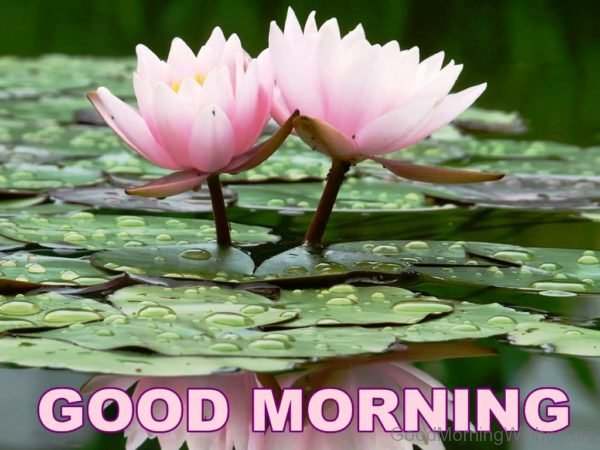 Good Morning Lily Flowers In Water