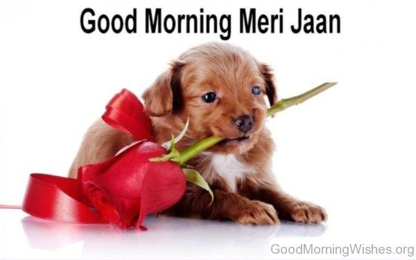 Good Morning Meri Jaan