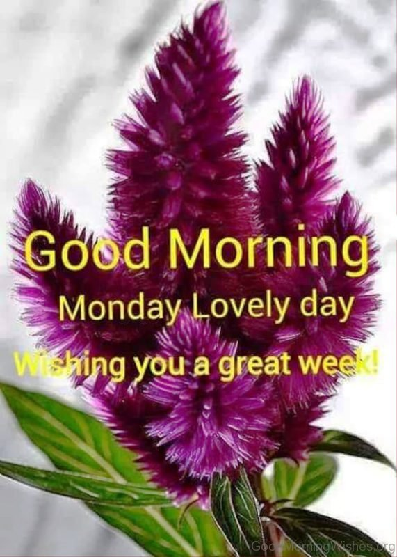 Good Morning Monday Lovely Day