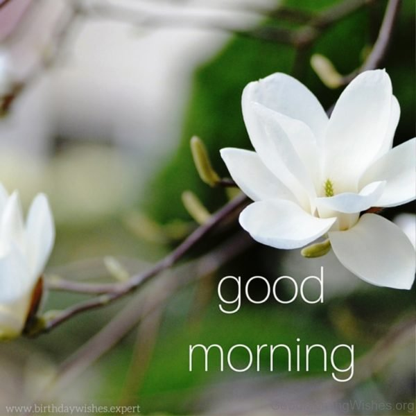 Good Morning Photo With Flower