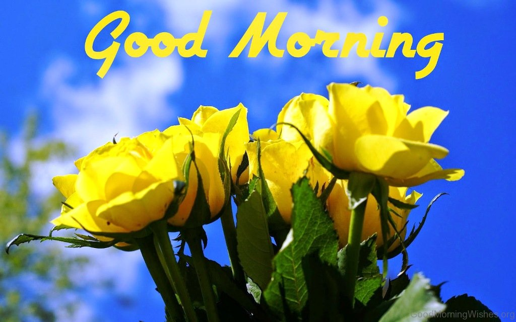 92 good morning wishes with rose good morning pic 5 mightylinksfo