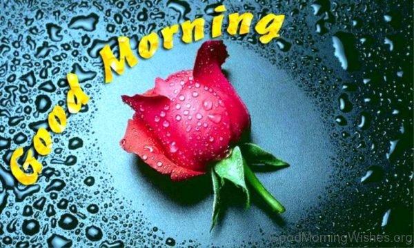 Good Morning Pic 8
