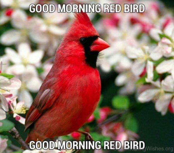 Good Morning Red Bird
