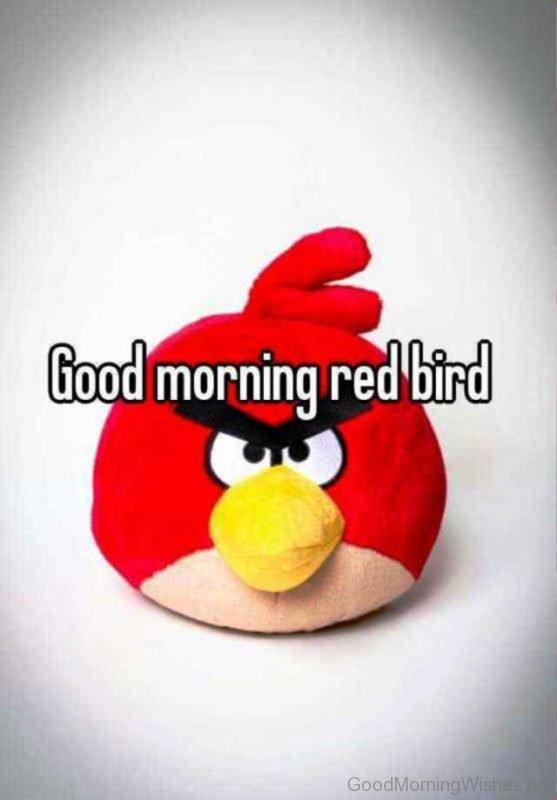 Good Morning Red Bird Pic