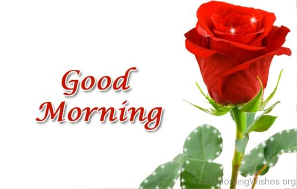 Good Morning Red Rose Flower
