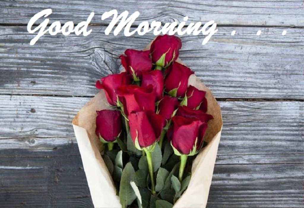 Good Morning Quotes Red Rose : Good morning wishes with rose