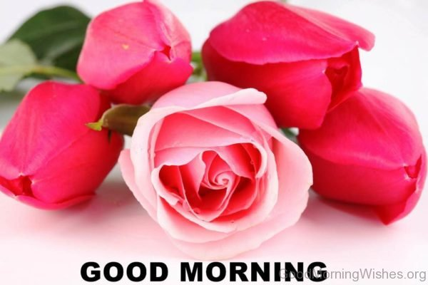 Good Morning Rose Flower Image