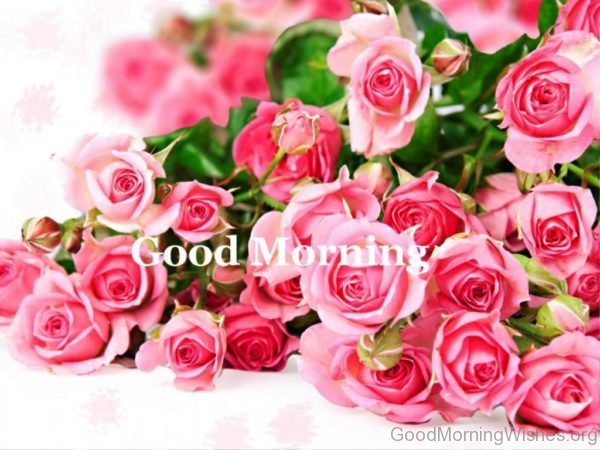 92 good morning wishes with rose good morning rose pictures mightylinksfo