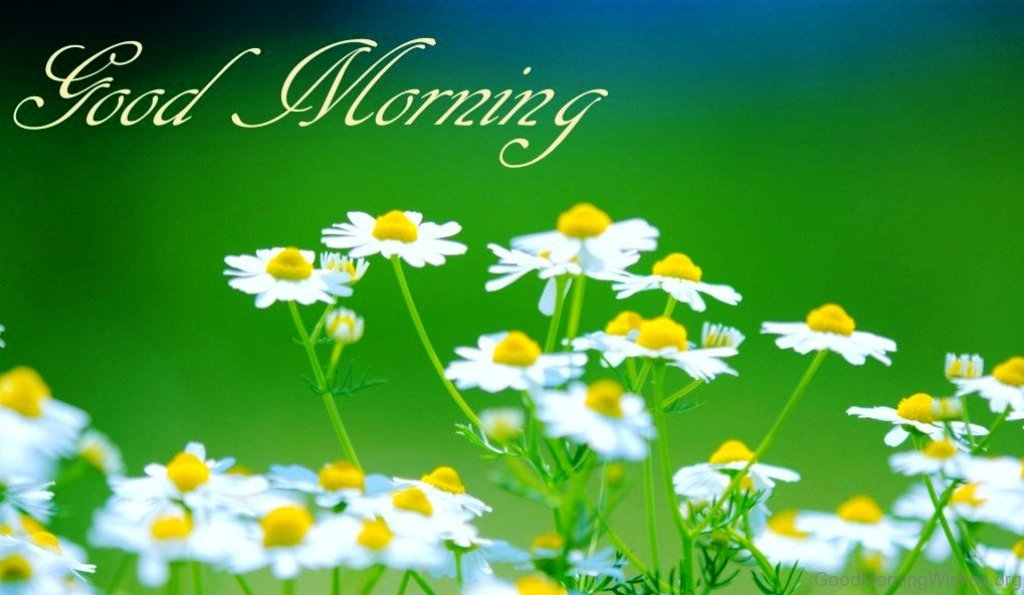 55 Fresh Good Morning Wishes