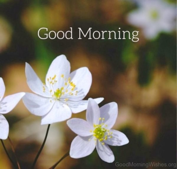 Good Morning Wishes With Flowers 2