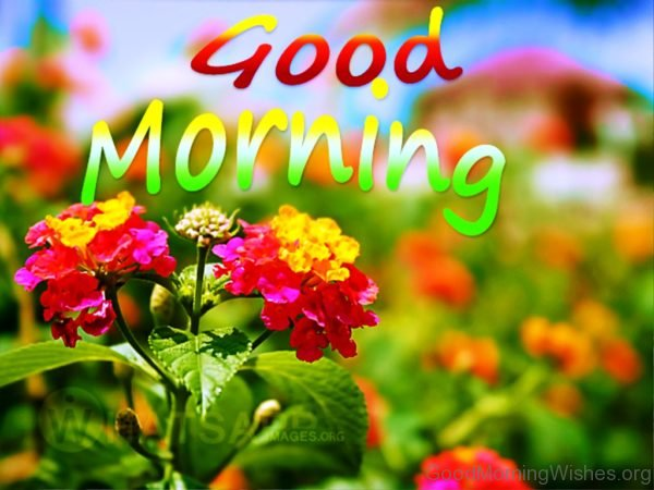Good Morning With Beautiful Flower