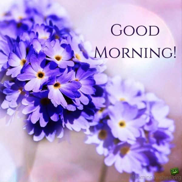 Good Morning With Beautiful Flower Image