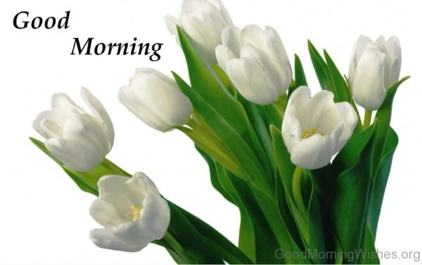Good Morning With Beautiful White Flower